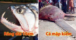 Phát hoảng với những loài thủy quái đáng sợ nhất thời nay