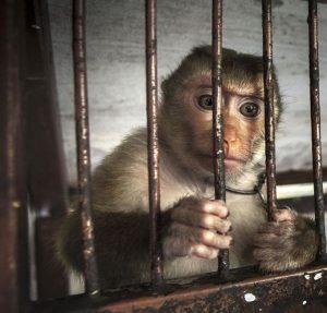 Những con vật sống chỉ để mua vui cho du khách ở Thái Lan