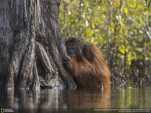 20 bức ảnh đẹp nhất cuộc thi ảnh thiên nhiên National Geographic 2017