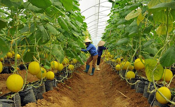 Quy định mới của Chính phủ về nông nghiệp, nông thôn mới