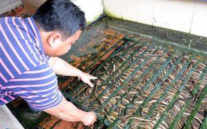 Nuôi lươn không bùn bằng giun quế, bỏ túi hàng trăm triệu một tháng