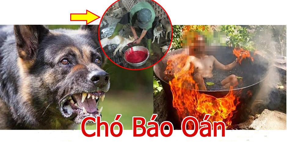 Bí ẩn những cái chết lạ kỳ, kinh hoàng ở ngôi làng mổ chó lớn nhất nước