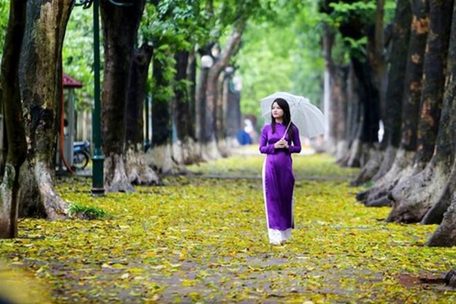Thành phố đang trôi trong mùa thu vàng nắng