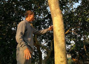 Đại gia gỗ định giá bao nhiêu cho cây sưa từng được trả giá 100 tỷ đồng?