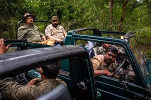 Ấn Độ: Chiến dịch dùng nước hoa vây bắt con hổ ăn thịt 13 người