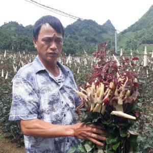 Làm giàu ở nông thôn: Chỉ thu 1 lứa hoa hồng mà có gần 1 tỷ