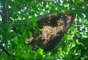 Nghệ An: Đàn ong dữ tấn công, 9 người thương vong