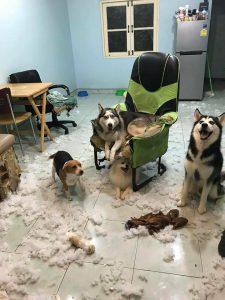 """Nuôi 1 bầy 4 con! Chủ nhân nhận điều tồi tệ từ đám """"boss"""""""
