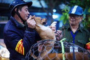 Trăn trở của người 'săn' chó thả rông chuyên nghiệp tại Hà Nội