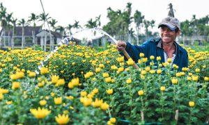 Làng hoa lớn nhất miền Trung sẵn sàng phục vụ Tết Kỷ Hợi
