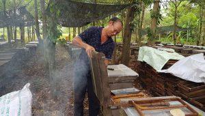 Thăng trầm nghề nuôi ong lấy mật