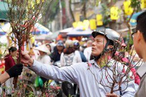 Xuân về rực rỡ trên chợ hoa lâu đời nhất Hà Nội