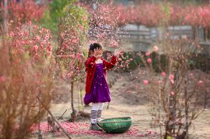 'Mai vàng nở rộ mừng năm mới – Đào hồng khoe sắc đón xuân sang'