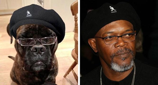 Chùm ảnh ngộ nghĩnh về sự giống nhau giữa động vật và các sao Hollywood