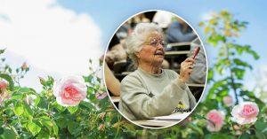 Câu chuyện truyền cảm hứng của một sinh viên đại học 87 tuổi tên Hoa Hồng