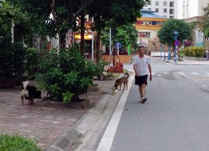 Thả rông chó: Phớt lờ quy định cấm – coi thường tính mạng người khác