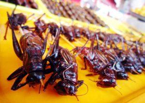 Những món ăn vặt ở chợ đêm Bắc Kinh khiến du khách sợ 'tái mặt'