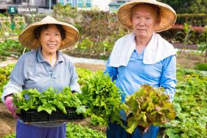 Tiết lộ 4 loại thực phẩm bí mật giúp người Nhật sống thọ