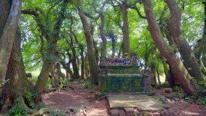 Bí ẩn ngôi mộ cổ nằm giữa quần thể lộc vừng hơn 1.000 năm tuổi