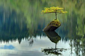 10 kiệt tác bonsai đẹp hiếm có, giá khó tin