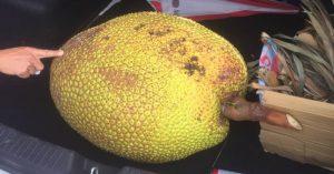 Tiền Giang: Trộm một trái mít 35 nghìn, lãnh 2 năm 6 tháng tù
