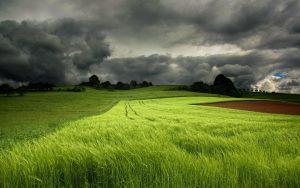 Những cánh đồng trong bão