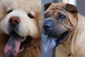 Khám phá những sự thật bất ngờ và thú vị về loài chó