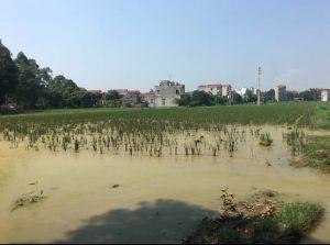 Vụ doanh nghiệp trúng đấu giá 205 lô đất ở Bắc Ninh: Không có chuyện tiêu cực, sai quy trình