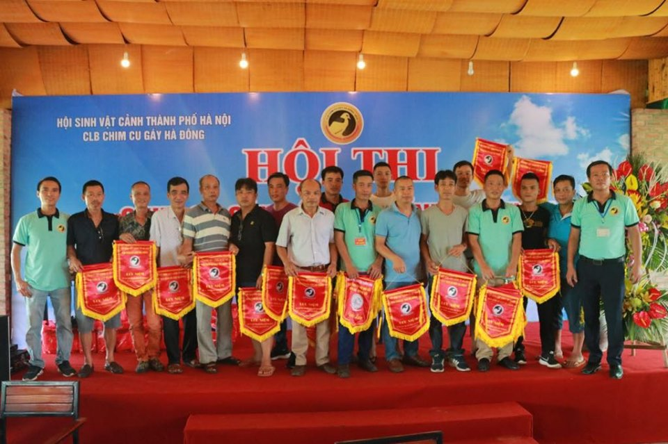 Nét đẹp Hội thi chim cu gáy liên tinh lần thứ nhất tại Hà Nội