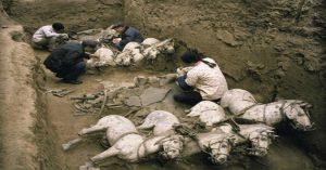 Vì sao lăng mộ Tần Thủy Hoàng có cả thế giới động vật bên trong?