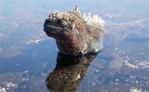 Bí ẩn về quái vật khổng lồ ở vùng biển Cát Bà