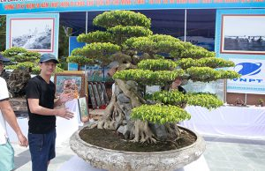 Choáng với cây sanh 'Huyền Phượng Vũ' có giá 23 tỷ đồng