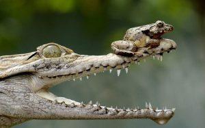 Những khoảnh khắc của lòng can đảm trong thế giới động vật