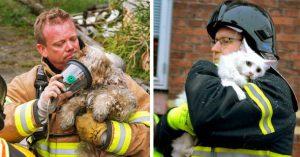 Rớt nước mắt với những video giải cứu động vật