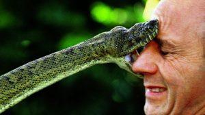 Những loài rắn nguy hiểm nhất Việt Nam, một phát cắn chết 1000 người