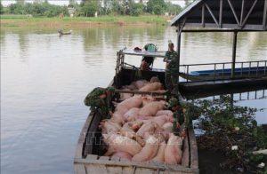 Bắt giữ hơn 3,7 tấn lợn vận chuyển trái phép từ Campuchia về Việt Nam