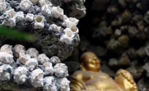 Chiêm ngưỡng ngôi chùa được làm 100% bằng vỏ ốc có thật ở Khánh Hòa