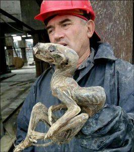 Phát hiện sinh vật kỳ lạ khi khai mỏ kim cương