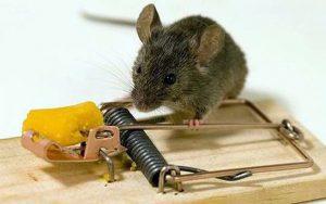 'Chiếc bẫy chuột làm chết cả con bò': Câu chuyện đáng suy ngẫm về lòng quan tâm