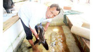 'Vua cá chình' đầm Trà Ổ