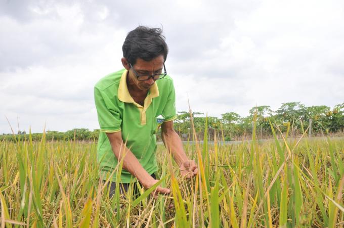 'Nhà khoa học' chân đất lai tạo 50 giống lúa… chỉ để tặng Nhà nước