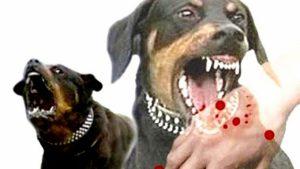 Tại sao người bị chó cắn cứ đến đám ma là phát dại?