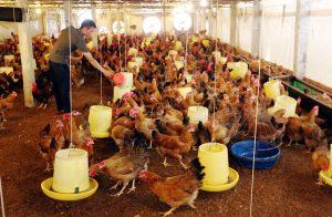 Thái Nguyên: Hỗ trợ đào tạo nghề cho gần 42.000 lao động nông thôn