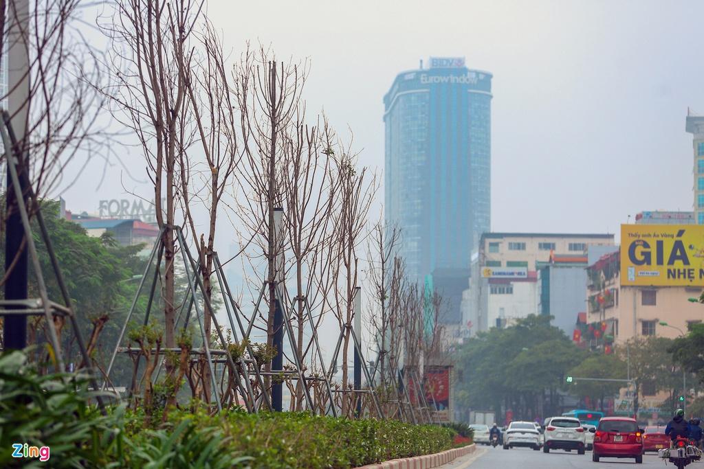 Cái chết của những cây phong lá đỏ ở Hà Nội