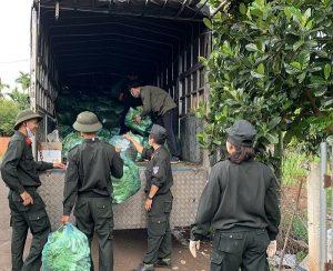 Người Đắk Lắk, Đắk Nông gom rau xanh, củ cải gửi tặng TP.HCM chống dịch