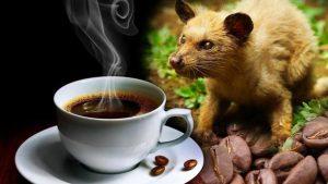 Phát hiện 1.000 gói cà phê chồn làm từ… đậu nành, bắp