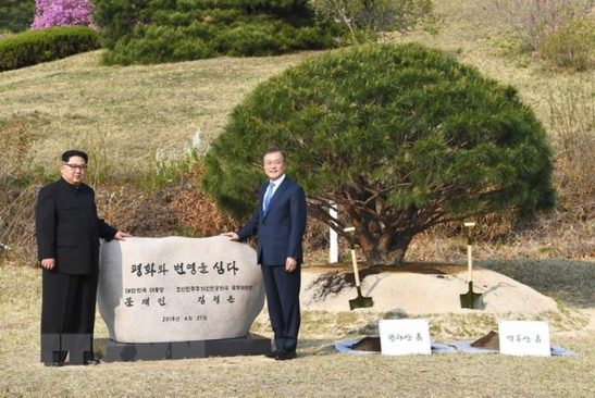 Tổng thống Hàn Quốc trồng cây lưu niệm với Kim Jong Un