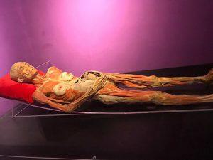 Dừng triễn lãm kinh dị 'nội tạng và cơ thể người hóa nhựa' tại TP. HCM