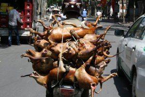 Bệnh dại có xu hướng tăng, Hà Nội siết chặt hoạt động buôn bán, sử dụng thịt chó