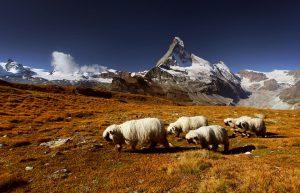 Đứng hình trước vẻ đẹp của dãy núi Alps hùng vỹ